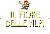 BB Alpe Devero Il Fiore delle Alpi